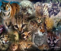 Wild Cats by emecee