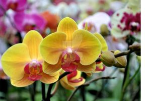 orchid III by AnAntichrist11