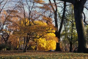 Central Park 1992_01 by photoscot