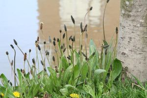 weeds at the water side by priesteres-stock