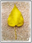 Leaf On Sand by Retoucher07030