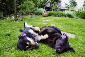 Doggies in grass by 2cool2care
