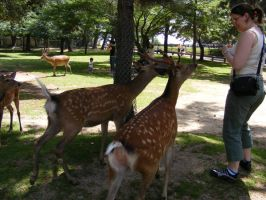 Deer in Nara by TigrisFirecatcher