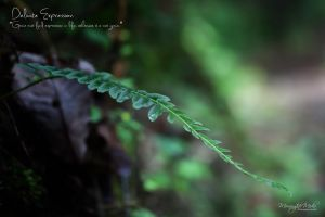 .Delicate Expression. by MorningtideMedia