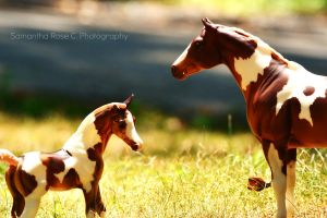Mare and Foal I by SamanthaRoseCPhoto