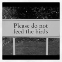 Don't Feed the Birds by Grumbles106