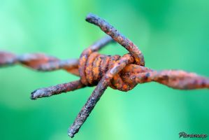 Barbed Wire by ParaMAX