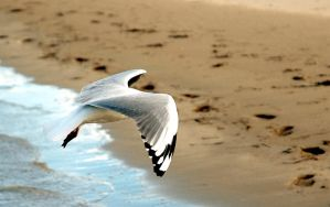 Headless Seagull by xjames7