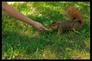 Playful Squirrel 2 by XeoPhoto