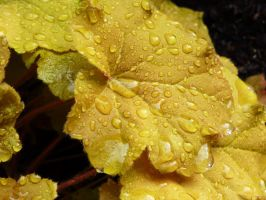 Rain-soaked Autumn Leaves 3 by MogieG123