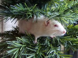 There's a rat in my tree by MonstrositiesNZ