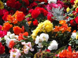 Colourful Flowers from Dalbeatie :3 by Fran48