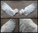 White Pigeon Wings by CabinetCuriosities