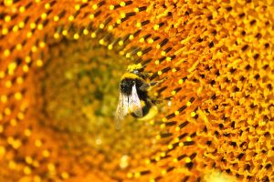 Bee by petimouton