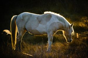 Wild Horse 4 by bovey-photo