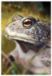 Toad, pastel by popChar