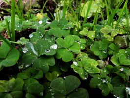 shamrocks? by bevwearsprada
