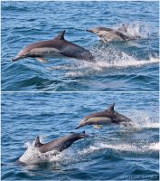 Leaping dolphins by Oracle88