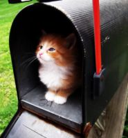 Waiting for the Mail to Come by blacksnowflake816