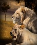 A Pair Of White Lions by sylki51