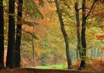 On the autumnal path again by jchanders