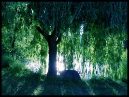 Under the Weeping Willow by jewelslove