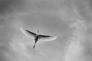 The Flight by sasonian37