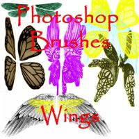 Photoshop Wing Brushes - set 1 by firebug-stock