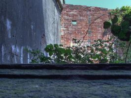 Broken Leaves and Wall by underitall