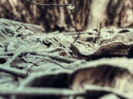 Mystical soil of winter forest by Piroshki-Photography