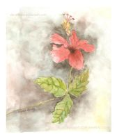 Flower in Watercolor by De-Xtreme
