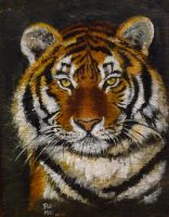 siberian tiger by SAMANTHA58