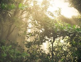 Morning in Forest - SharpPhoto edit by SharpPhotoStudio