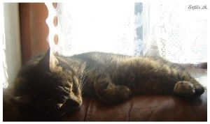 a cat's life 2 by sofille