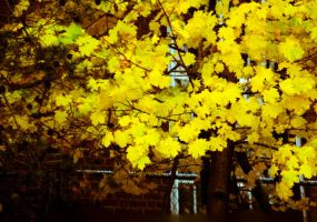 Yellowing Yellow by wetdryvac