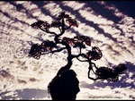 Japanese tree by beads-poet