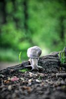 Snail on the run II by tomsumartin