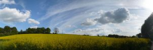 a land of yellow by clarinetman91