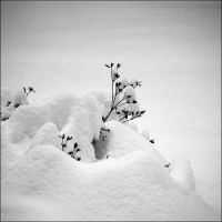 Under the snow blanket by aponom