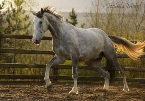 horse #44 by imtl