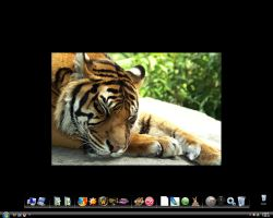Tiger Lulubaby Wallpaper by Leo250