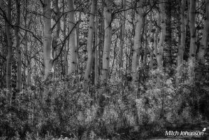By the Trail BW by mjohanson