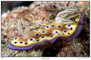 sea slug 7 by carettacaretta