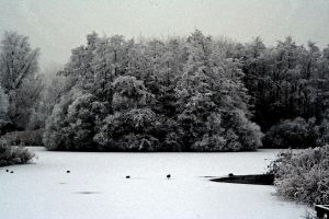 winterland 7 by priesteres-stock