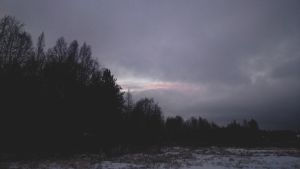Wintery Trees 2 by gravewithnoname