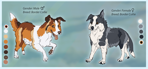 Collies by the Border by WagginKennelClub