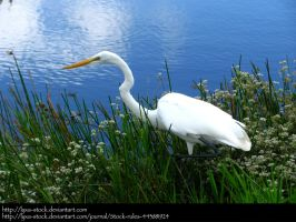 Great Egret 01 by Lyxa-Stock