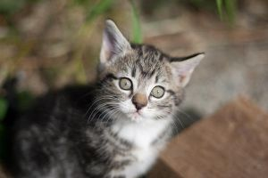 Little Kitten by JazzyPhoto