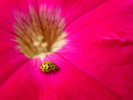 Pink and Yellow by Fliu