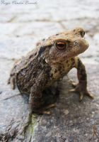 Mister Toad by FreyjaVB